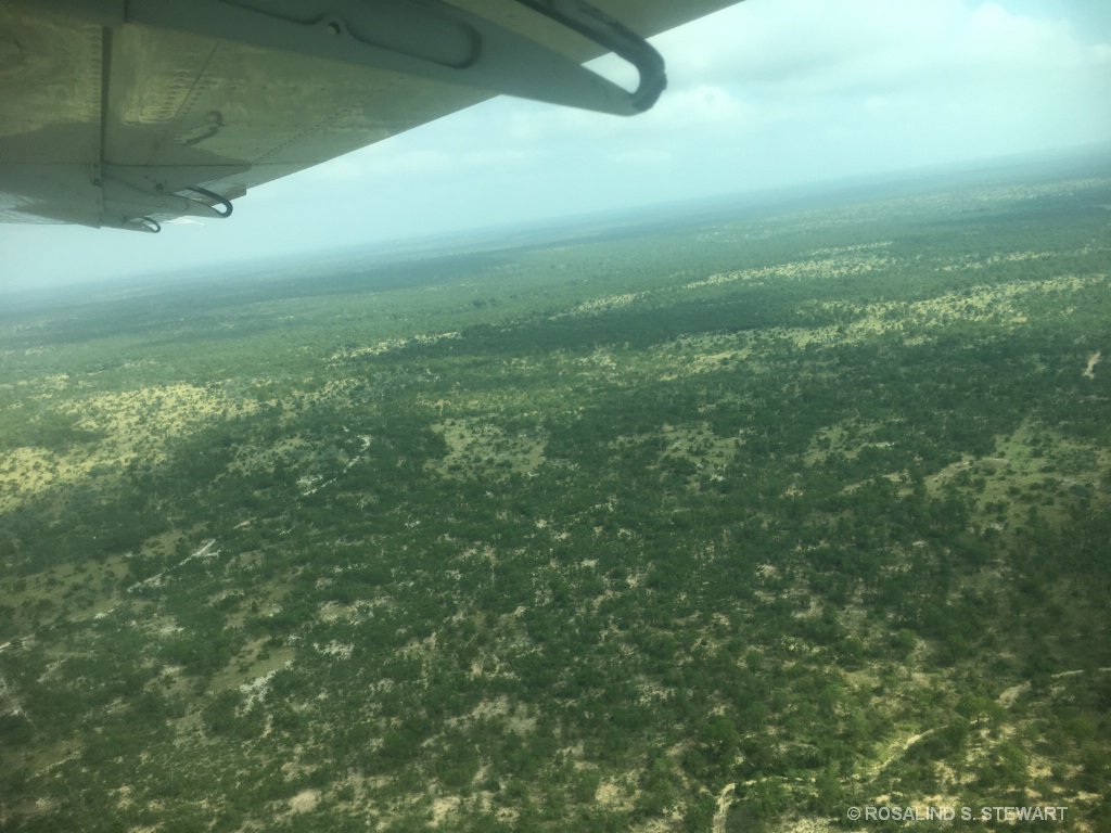 View from bush plane