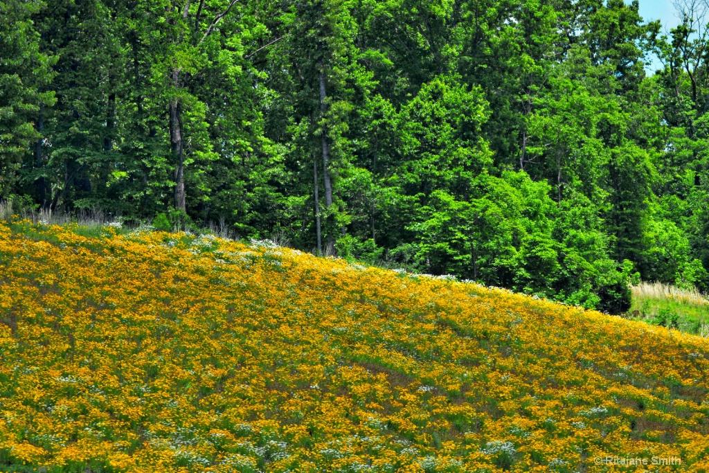 Pea Ridge Hill