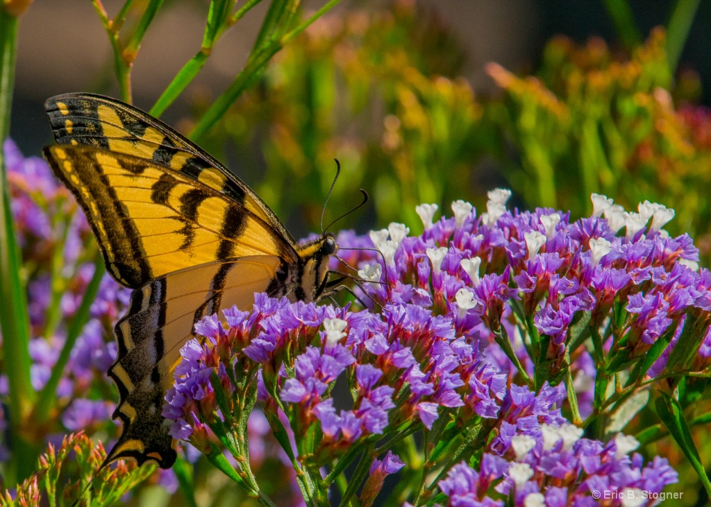 Color And Nectar.
