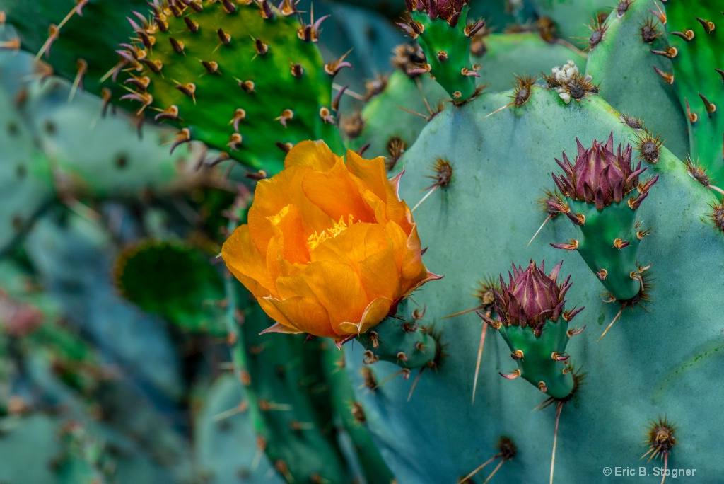 Golden Bloom And Needles.