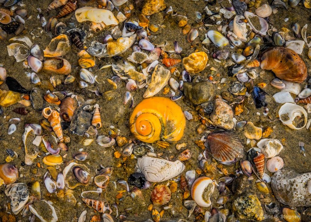 Shells And Sand 2.