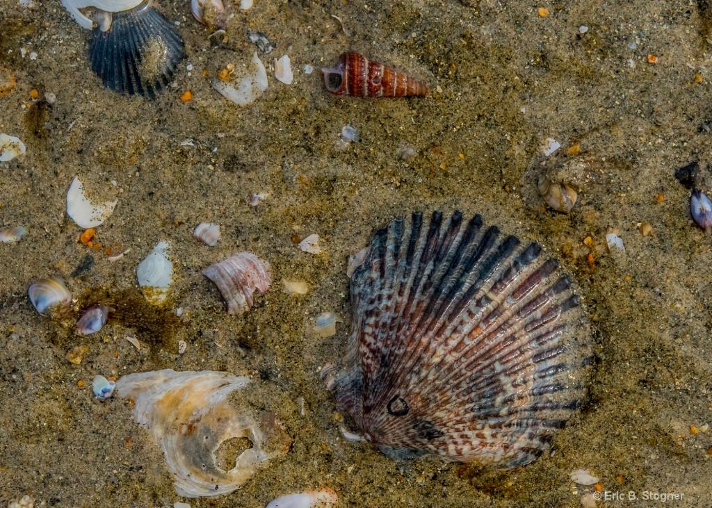 Shells And Sand 1.