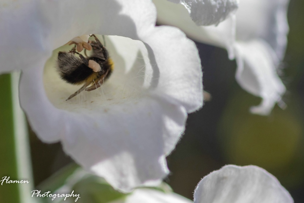 Pollen bathing