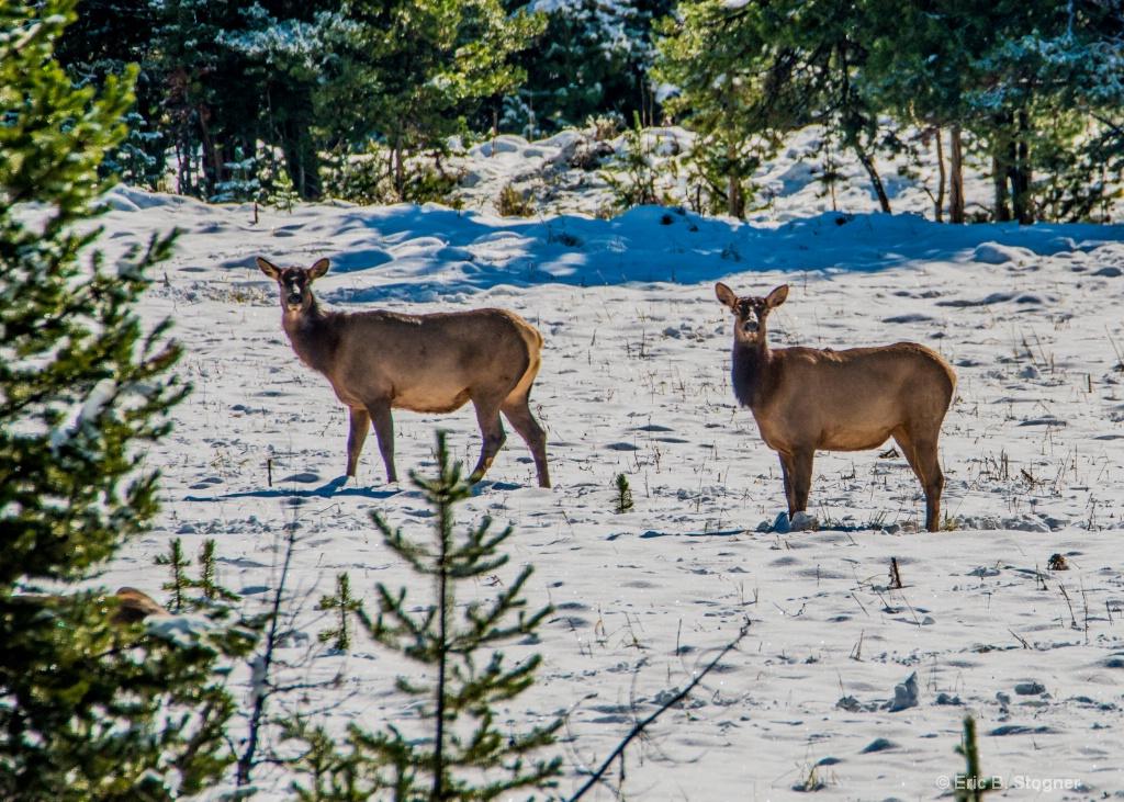 Elk Sisters.