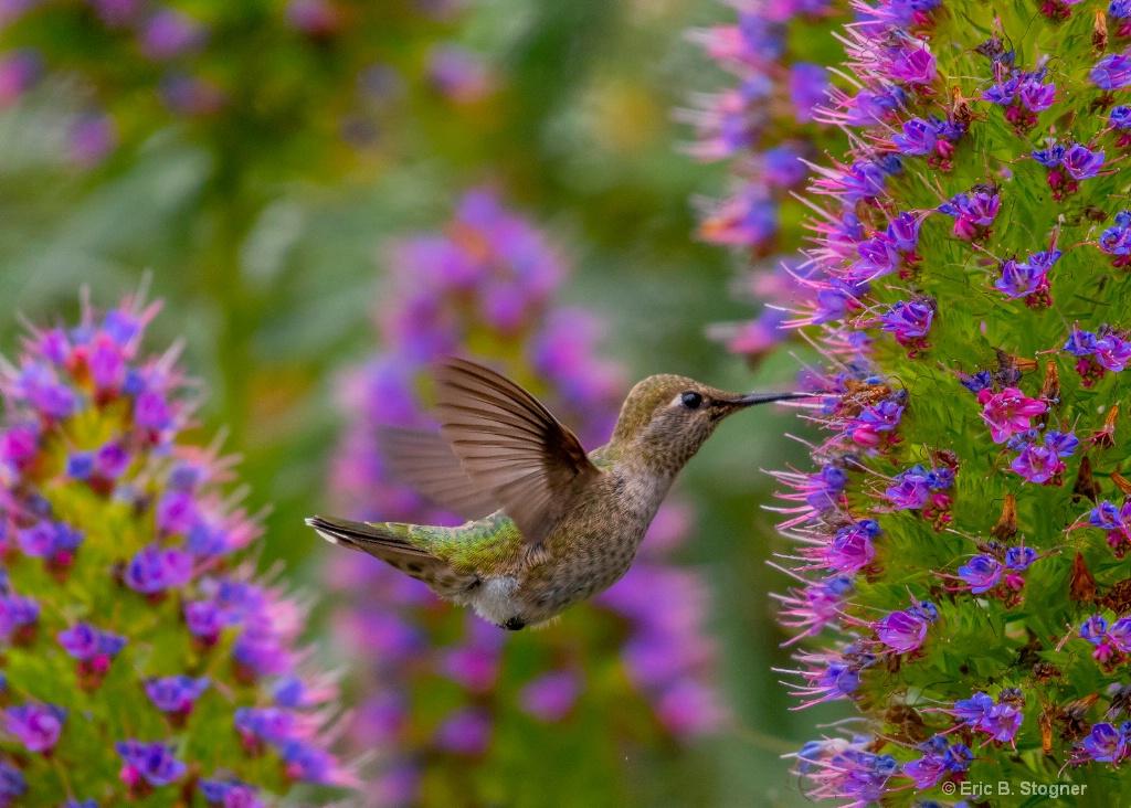 Purple Nectar.
