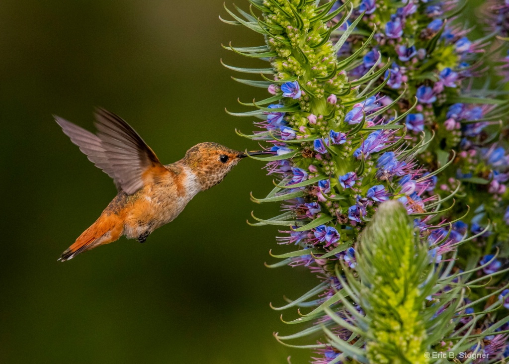 Wings and Flowers.