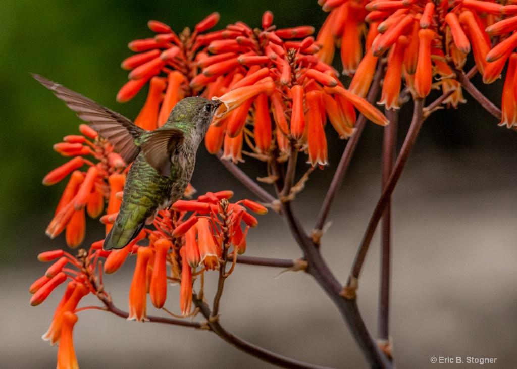 Orange Nectar.