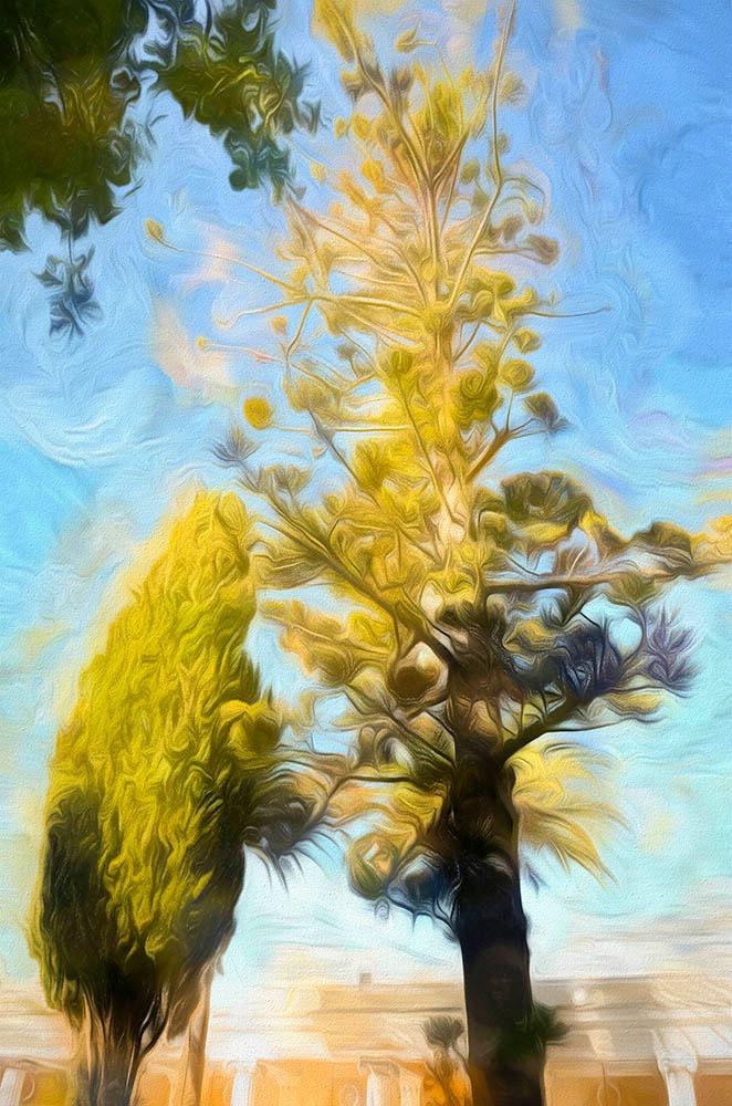 Corfu Trees