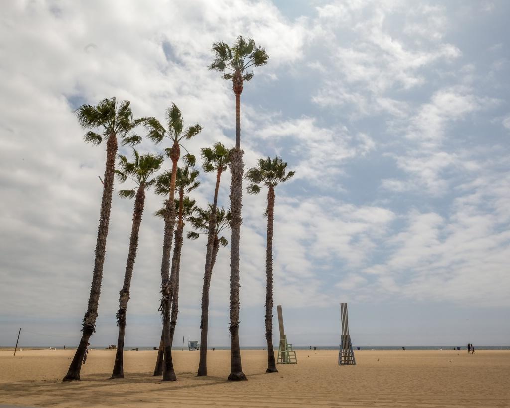 reach high palms