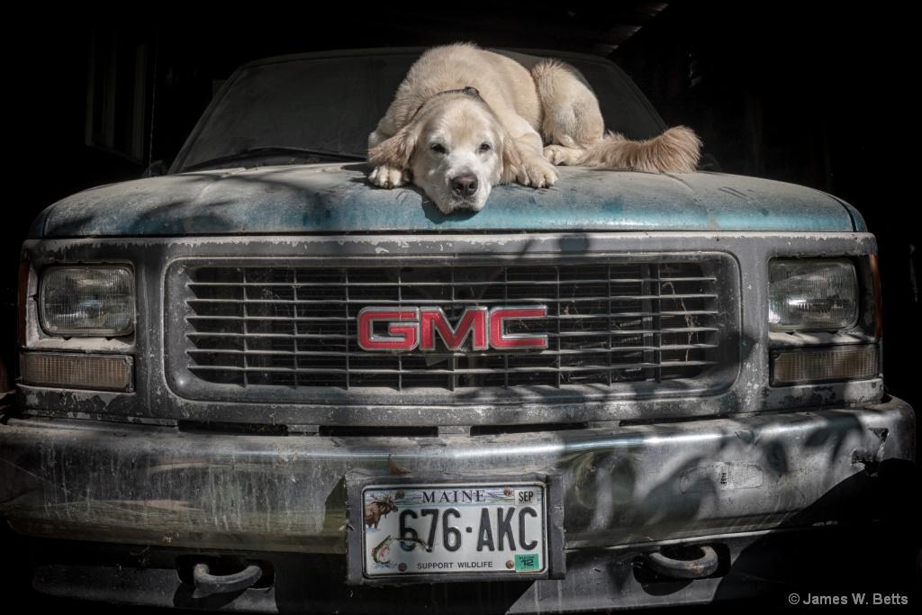 GMC Dog