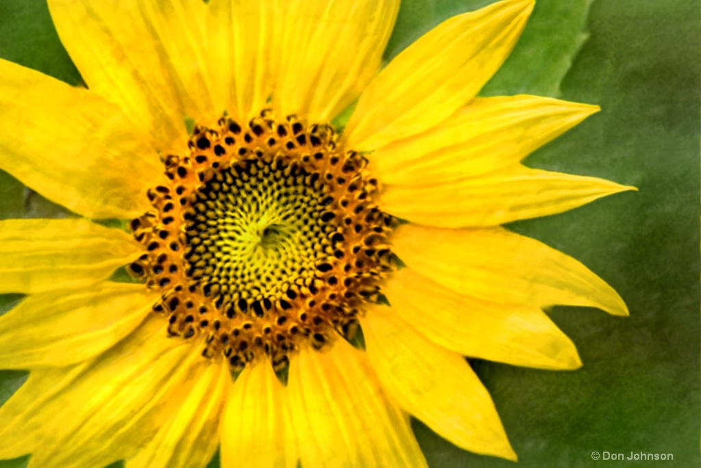 Artistic Summer Sunflower 6-0 F LR 7-13-18 J337