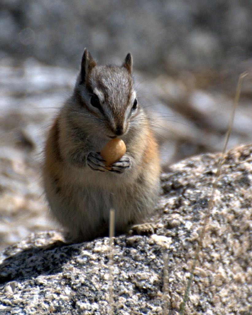 aww nuts
