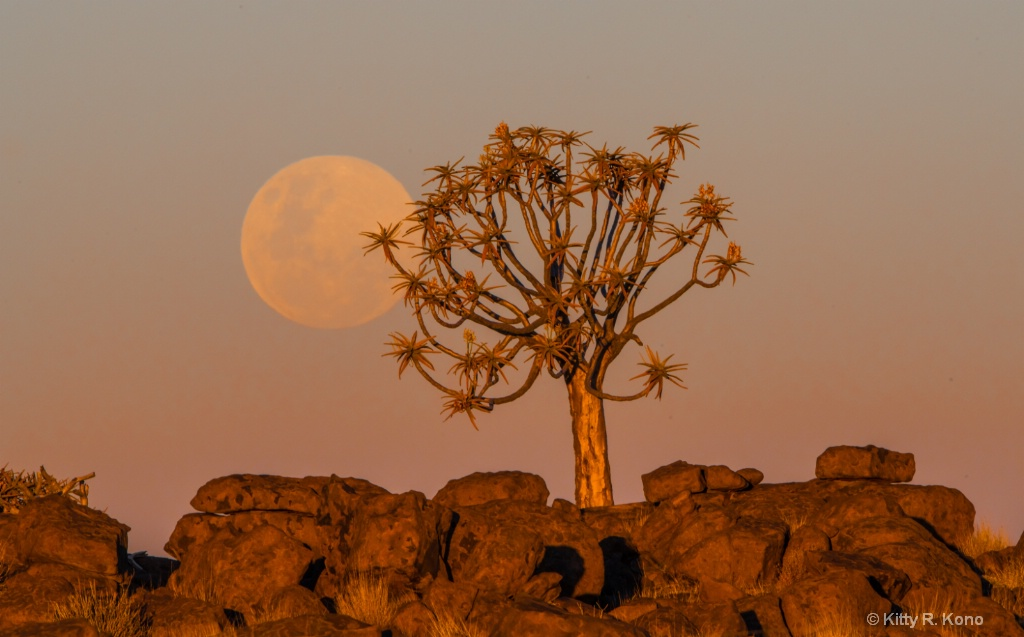 Full Moon Rising in the Quiver Tree Forest