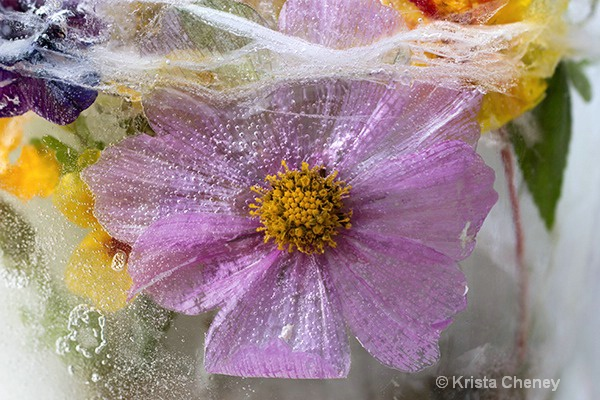 Cosmos in ice IV