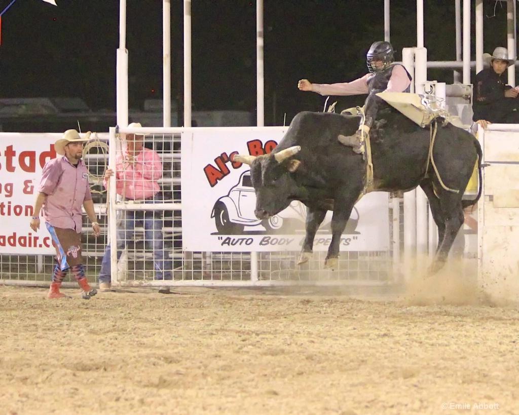 High flying bull