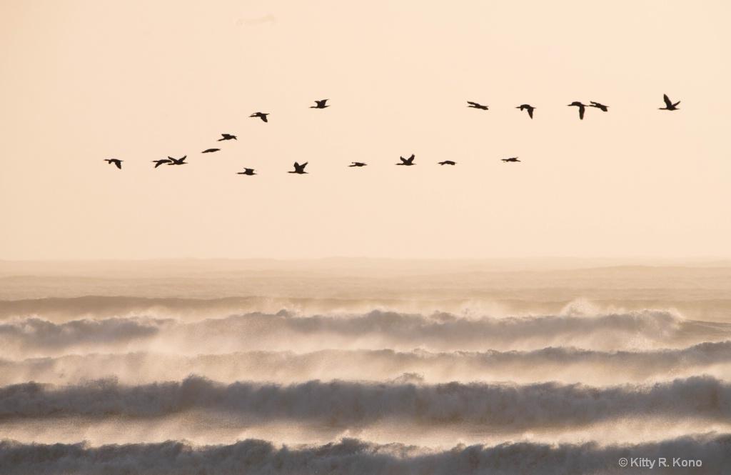 Cormorants over the Atlantic in Namibia at Dusk