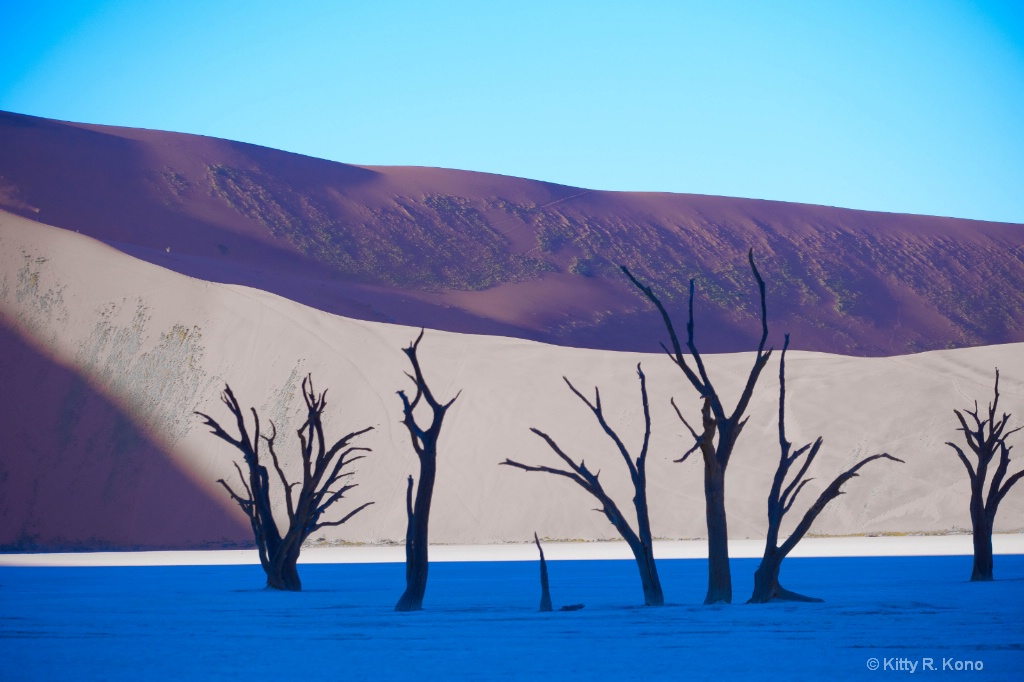 1,000 Year Old Fossilized Acacia Trees at Dawn