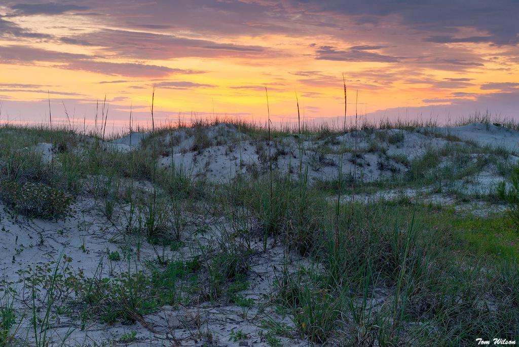 Cumberland Island Dunes