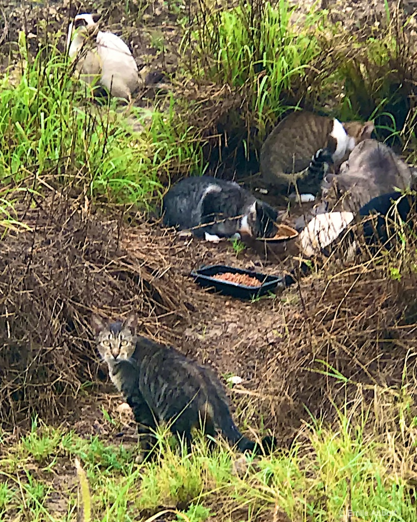 Feral Colony