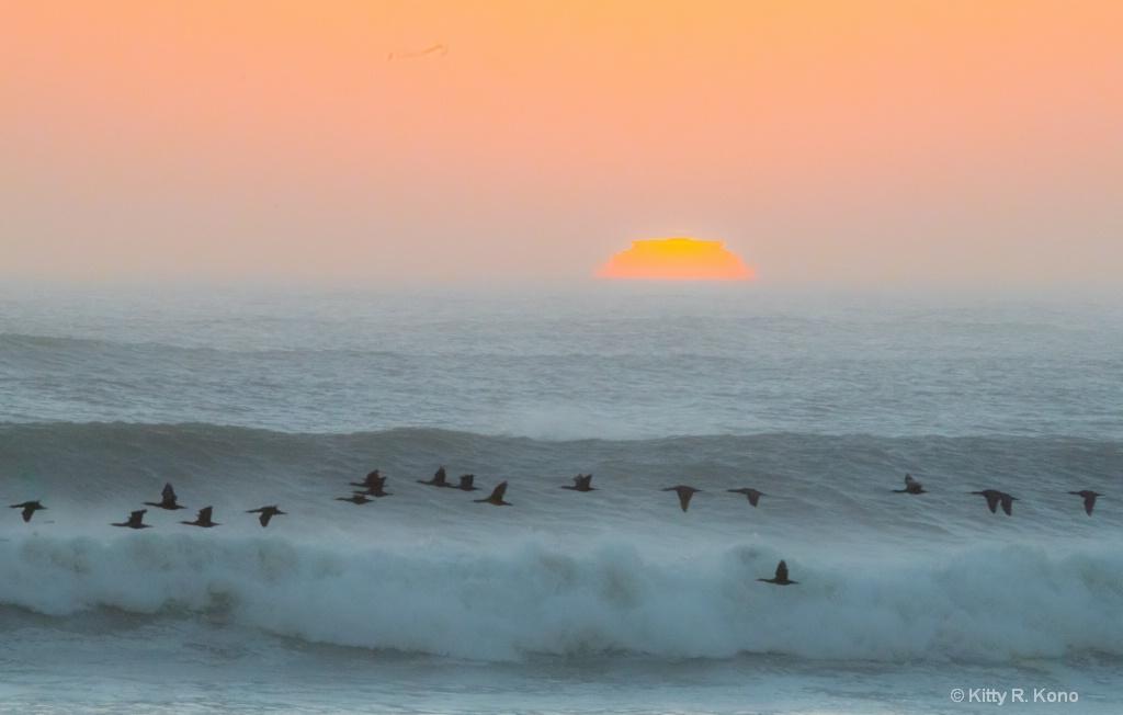 Sunset and Cormorants