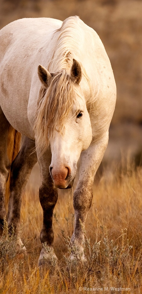 North Dakota wild horses 'Gray ghost'