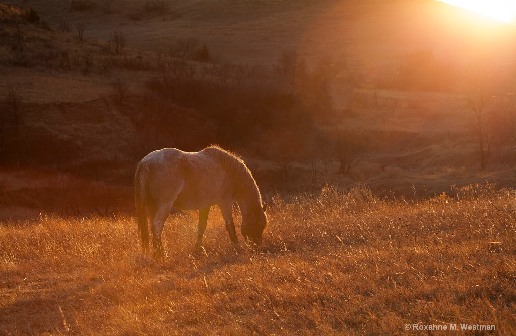 Wild horse in the evening glow