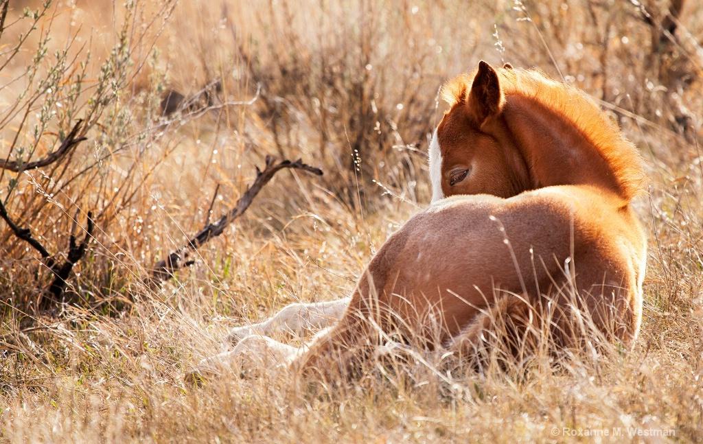 Snuggling foal