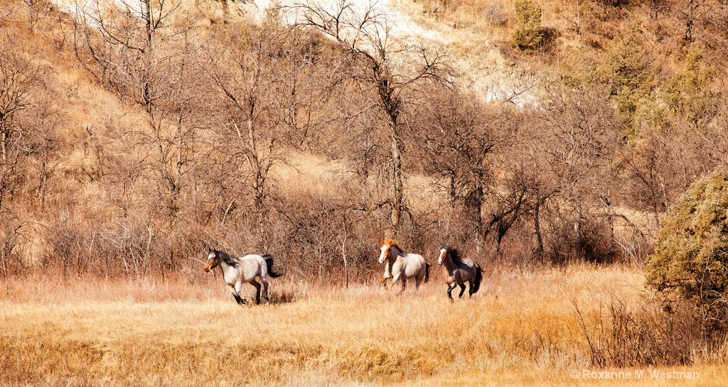 Wild horses on the run