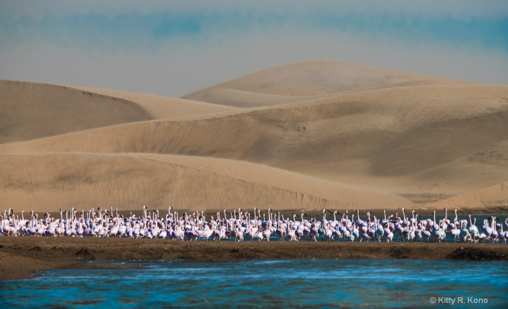 Pink Flamingos and Sand Dunes