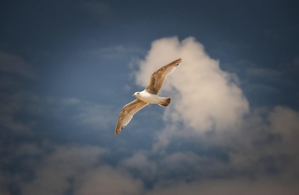 Cloud an Gull