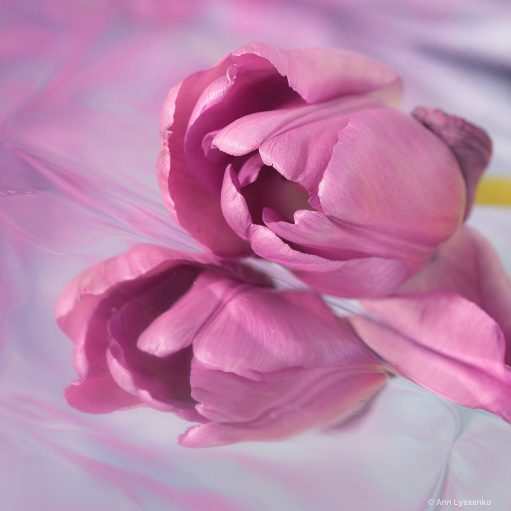 Pink Tulip Squared