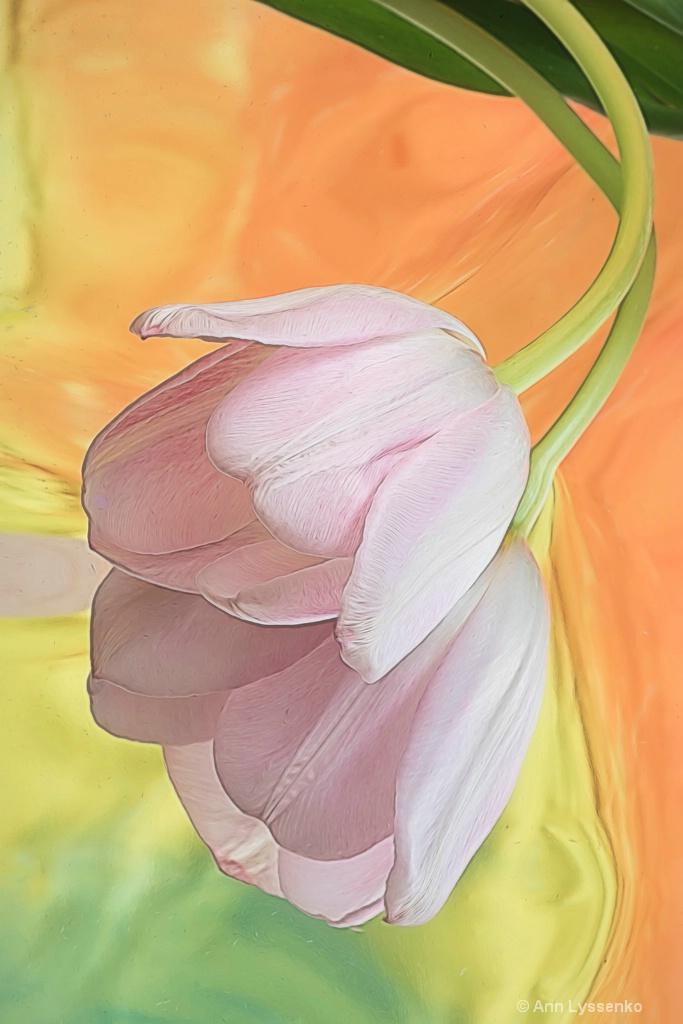 Hanging Tulip