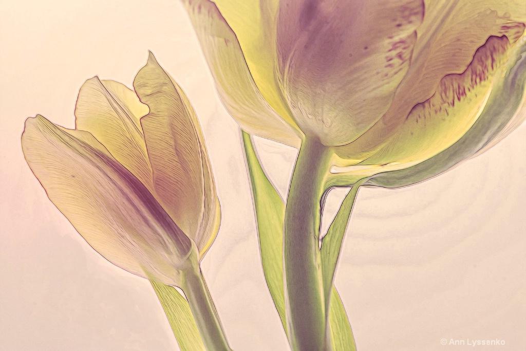 Yellow Daze Tulips