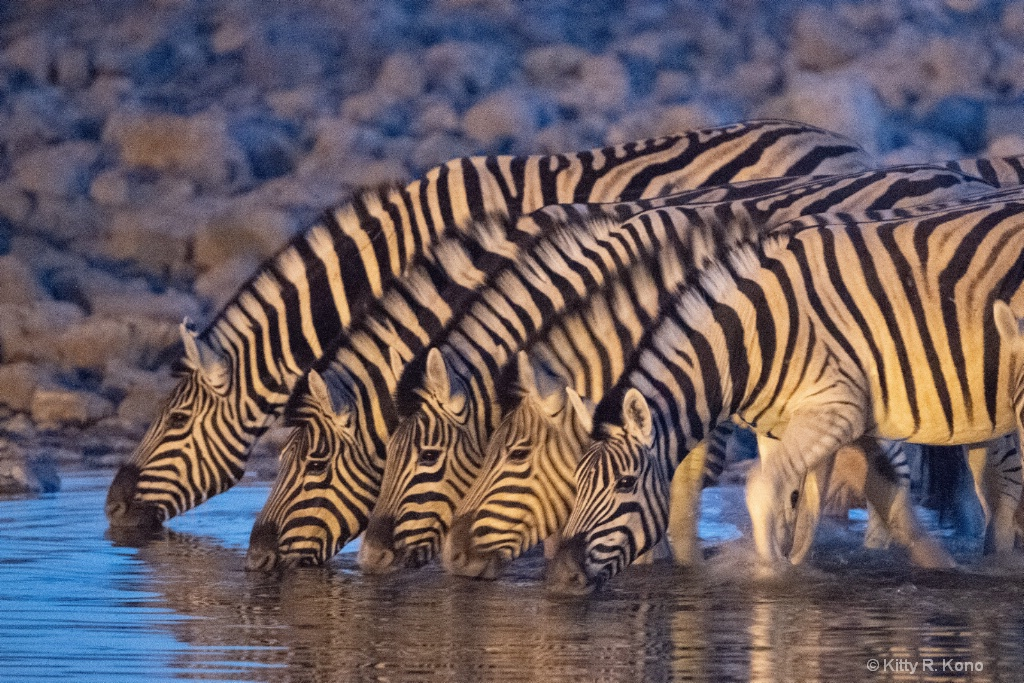 Five Zebra at the Watering Hole
