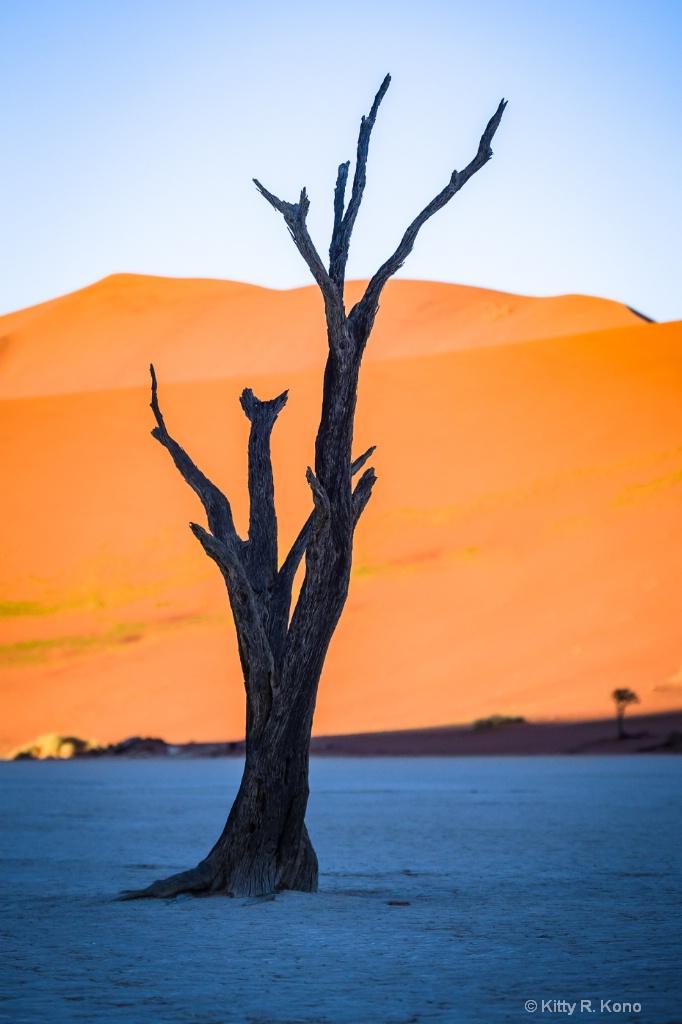Dead Vlei Cattle Thorn Tree