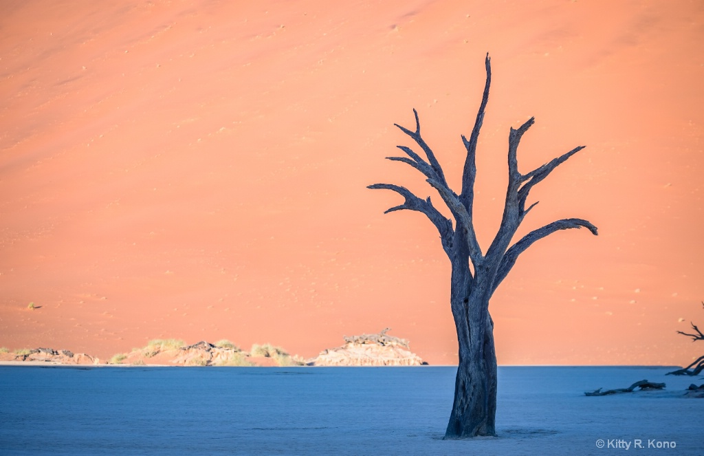 Lone Camel Thorn Tree - Dead Vlei
