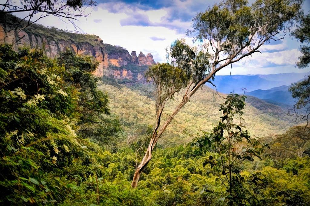 Descent Into a Rain Forest