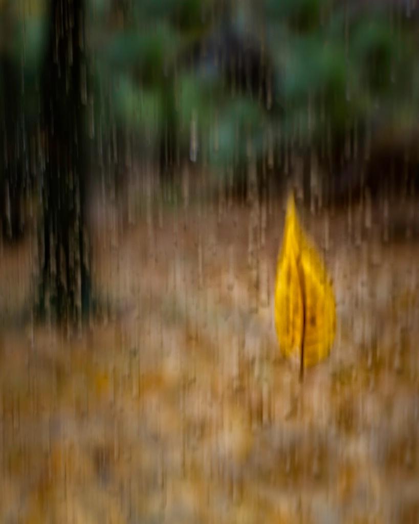 Falling Rain and Leaves  6523