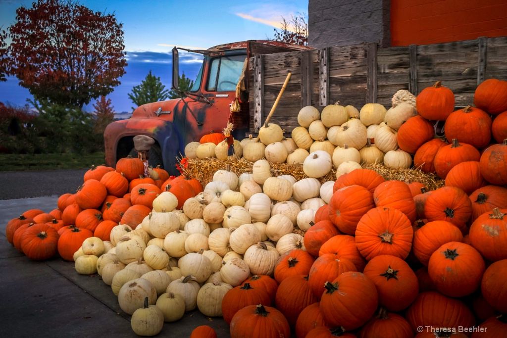 Abundant Overflowing Pumpkins - no spice