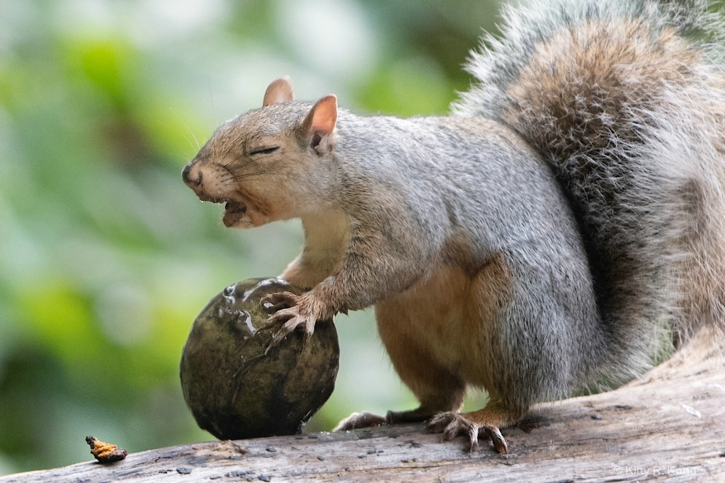 """""""Oh, I think this may be a bad nut."""""""