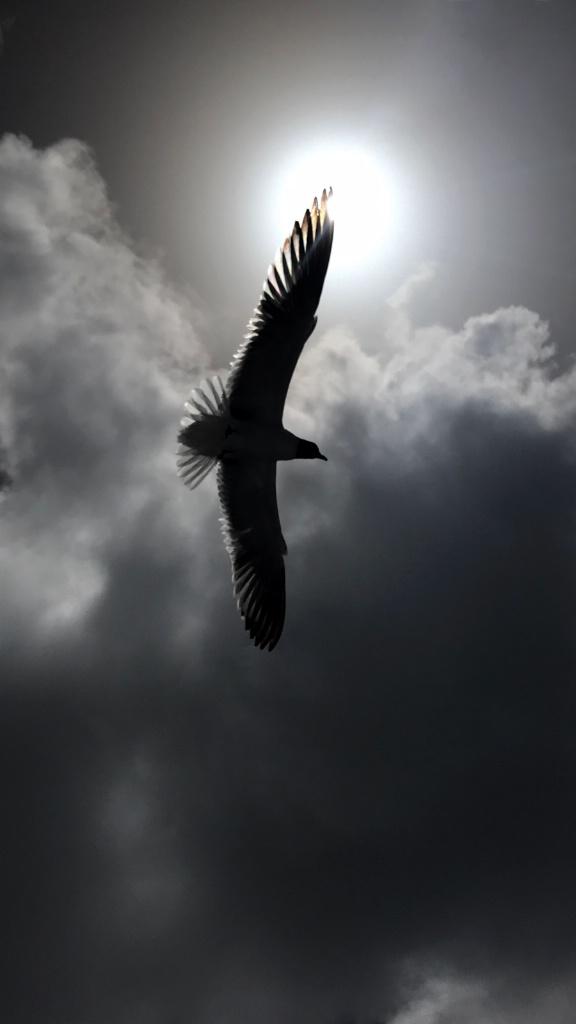Seagull At Sundown