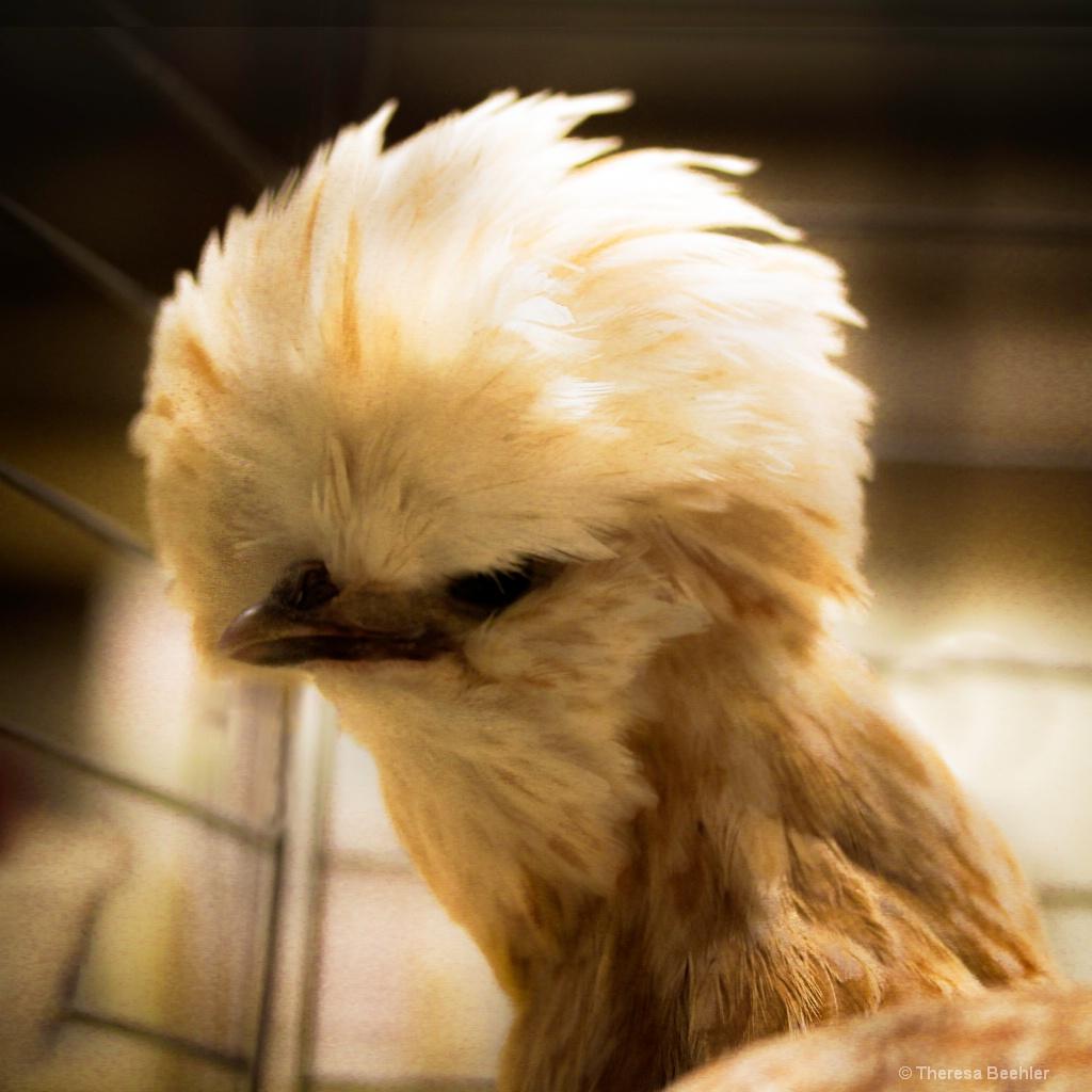 Fluffy Doo Chick