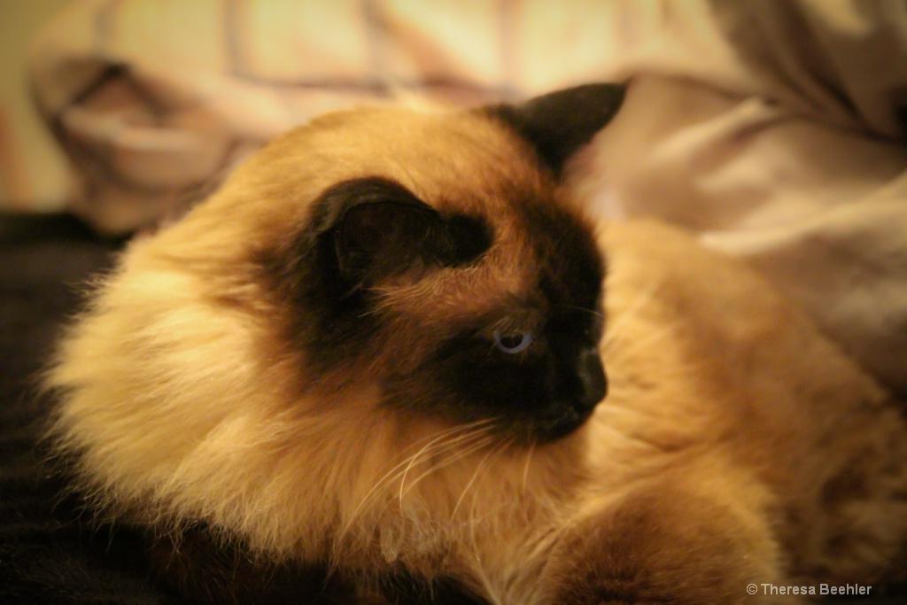 Smokey - one cool cat