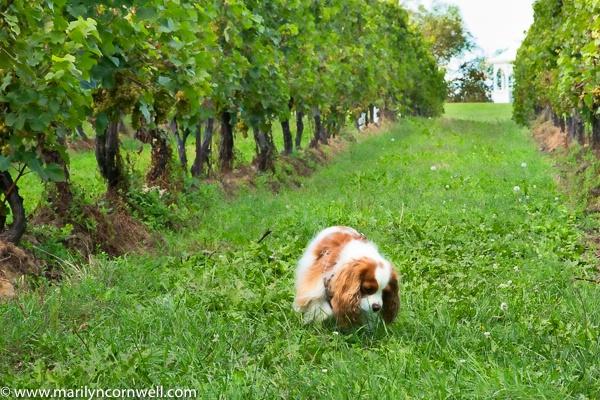 Dezi at Legends Winery