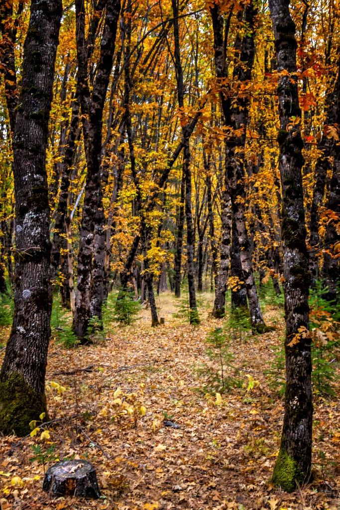 One Trees Memories  1318
