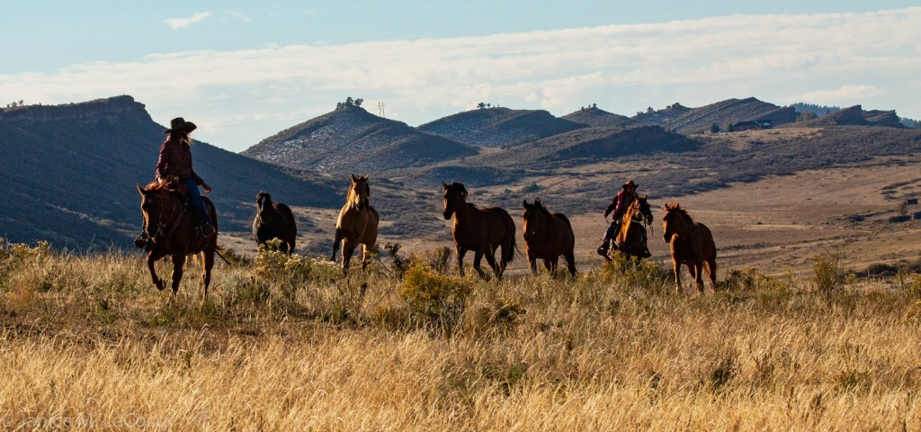 Wranglers Bringing in the Herd