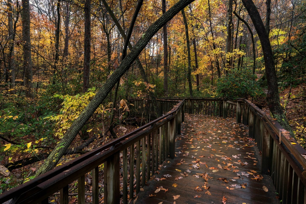 Woodland Boardwalk II
