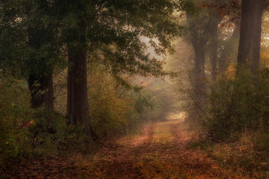 An Autumn Walk II