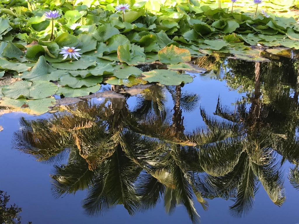 Tropical Mirror