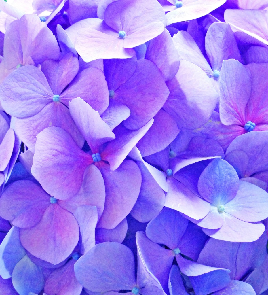 A bouquet of violet flowers.